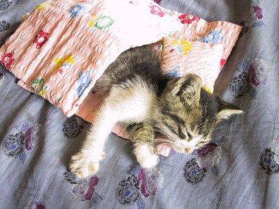初代みーちゃんの寝相