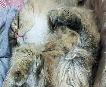王子、膝の上で寝る